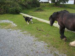 Häämatkaopas: Hevosvaellusta Irlannissa