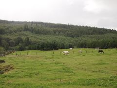Häämatkaopas: Irlantia hevosvankkureilla